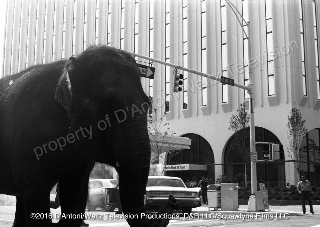 Anna Mae the elephant